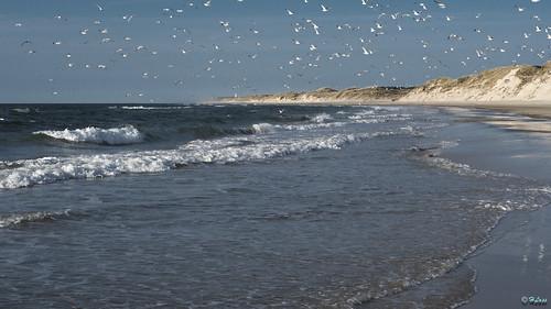 beach strand see meer lass hirtshals ufer hauke landschaft dänemark skagen skagerrak küste naturschutzgebiet naturreservat jütland kysten jammerbucht skyerne lumixgh lanskabet