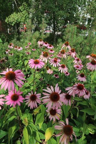 Fall Florals (SOTC 117/365)