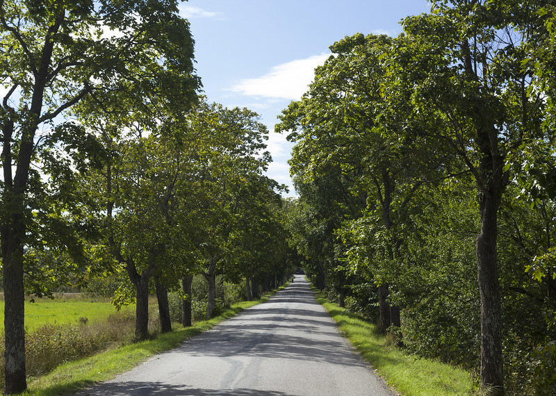 Green Alley Road