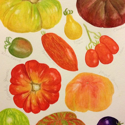 I think I'm (finally)  just about done with this painting! Just need to add the lettering. #heirloom #tomatoes #watercolor #migrationgoods #wip