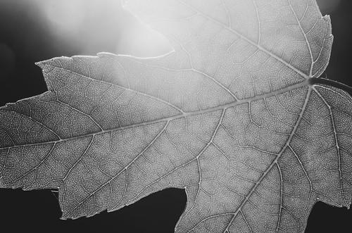 2014 08 24 Leaf