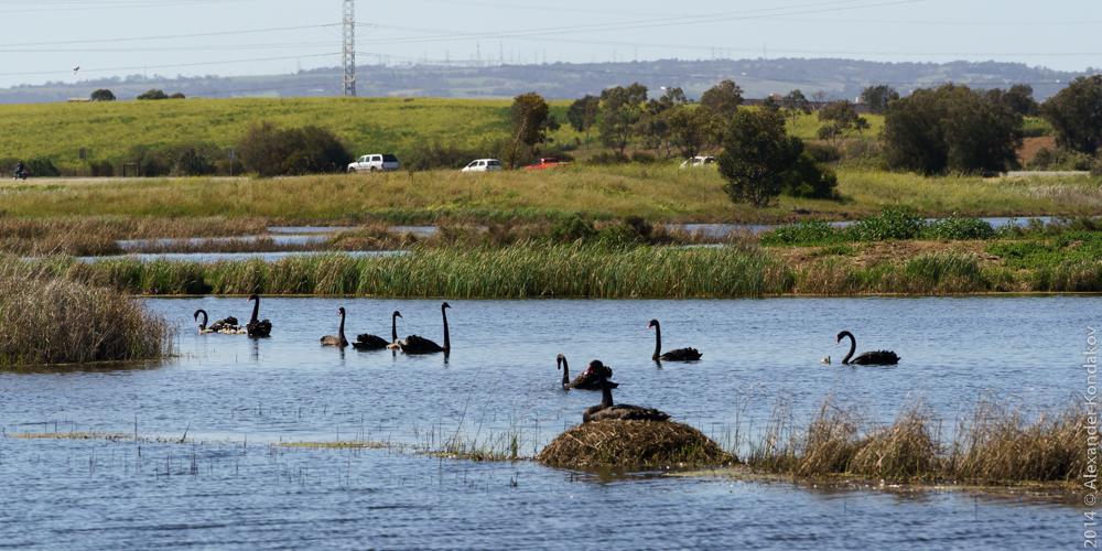 Birds SA Adelaide