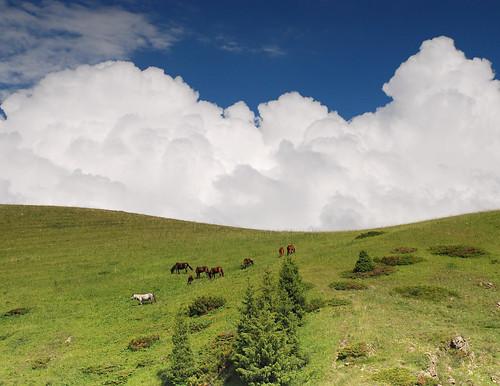 horse nature landscape kazakhstan kz asy asyplato