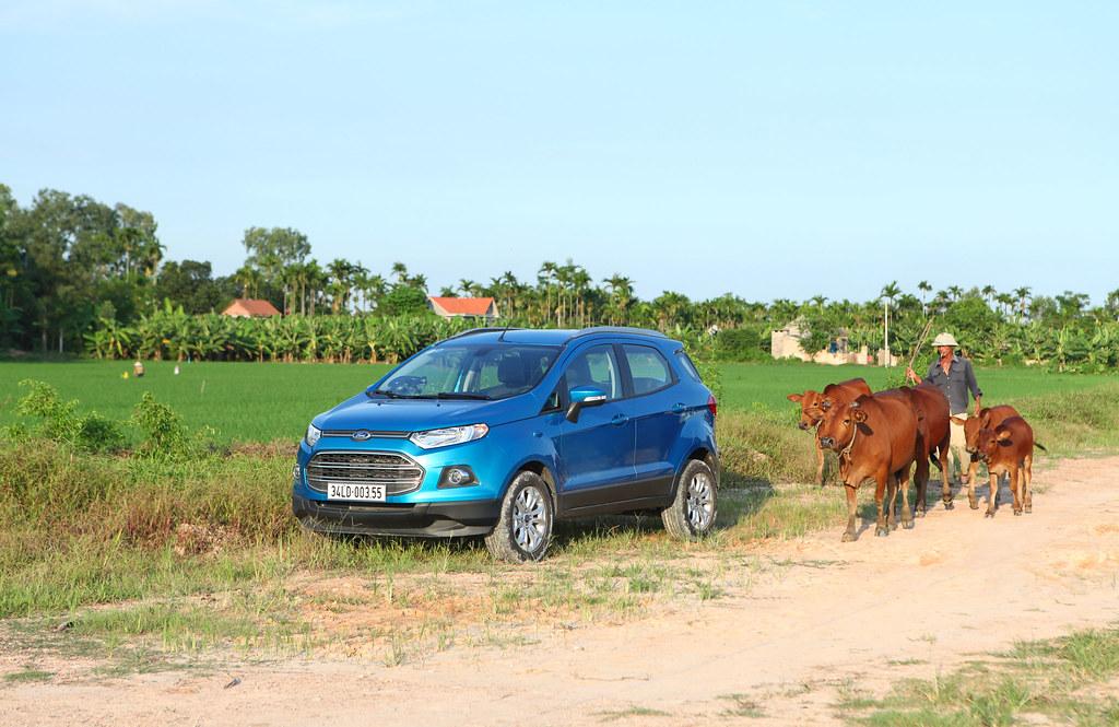 EcoSport và... bò