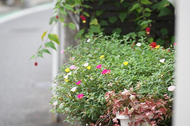 ぎゃらりーKnulp主催 谷根千フォトウォーク 2014年9月20日