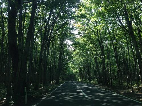 森の中を抜けて