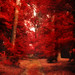 Red forest by IsabellaDim