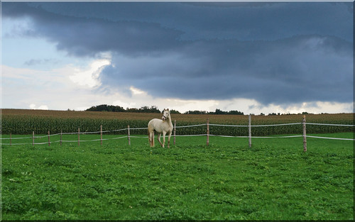 sky horses clouds bayern himmel taglaching