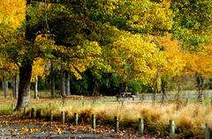 Autumn South Island NZ