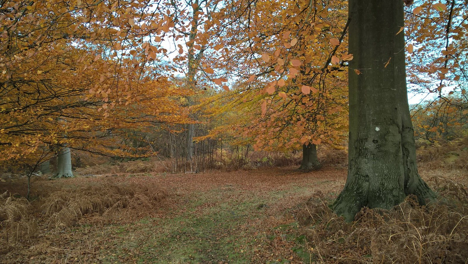 Sussex wood in autumn