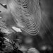 Snail and cobweb