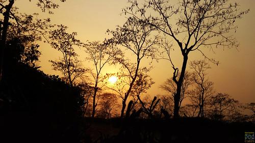 sun sunset evening outdoor nature silhouette light dark landscape tea teagarden sky