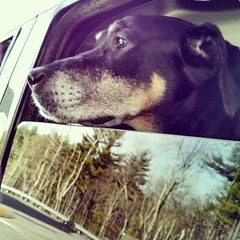 Pit stop for gas! She's a #happydog even if a bit #UnderTheWeather #carride #dogstagram #instadog #rescued #dobermanmix