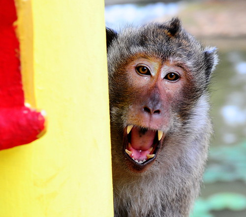 ,, Moody Monkey ,,