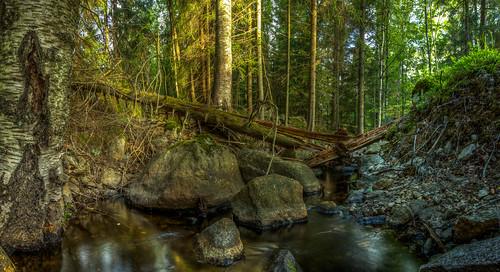 creek forest long exposure slow shutter