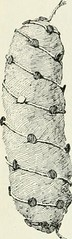 """Image from page 115 of """"First course in biology"""" (1908)"""