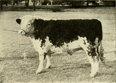 """Image from page 74 of """"Types and market classes of live stock"""" (1916)"""