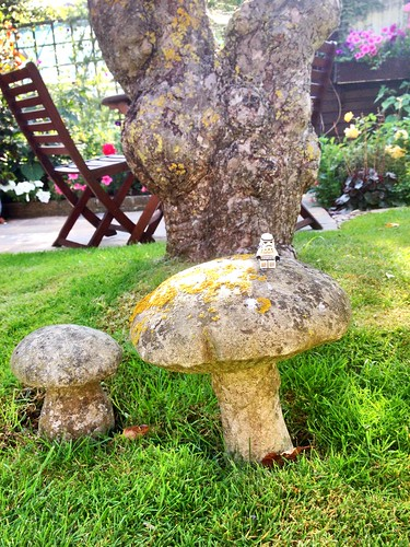 Stormy checks out my grandparents garden toadstools!