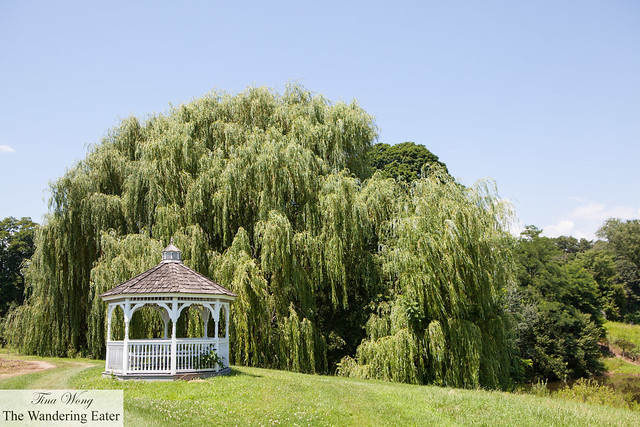 Gorgeous willow tree and a gazebo