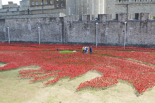 Poppies in moat