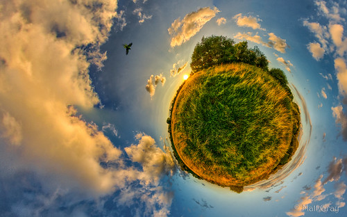 world sunset sky panorama colour bird grass clouds pano parrot parakeet planet hdr treessun