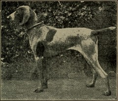 """Image from page 222 of """"Dogs of all nations. In prose and rhyme"""" (1903)"""