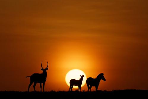 kenya mara masai 2014