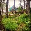 #green #himachal