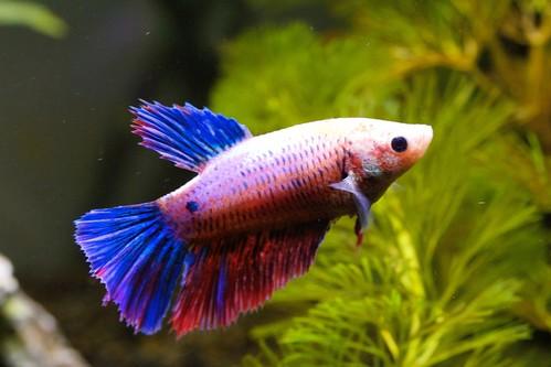 Lancement bac 55L (aquastart) - conseil pour les poissons 14796263892_6902a9f543