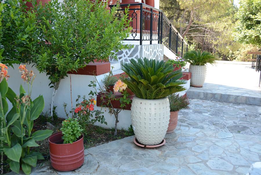 Greece's gardens