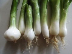 plant stem(0.0), vegetable(1.0), shallot(1.0), welsh onion(1.0), produce(1.0), food(1.0), scallion(1.0), leek(1.0),