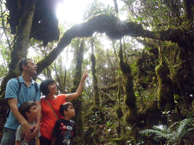 In the mossy forest, Cameron Highlands