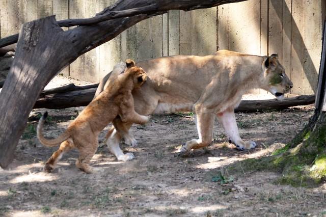 Attack Mom!