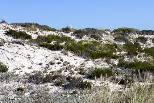 Un petit repère a été placé sur la dune, pour savoir où se trouve le chemin de la sortie. Ce n'est rien d'autre qu'un bâton planté là…