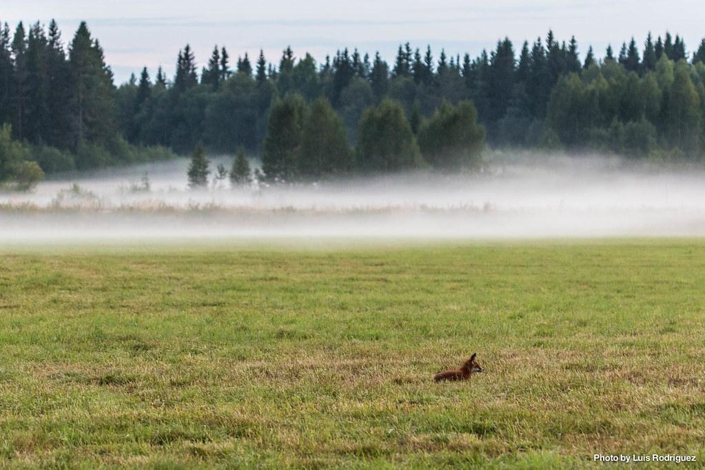 4 días en Laponia sueca-7