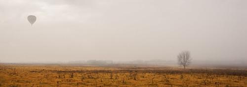 tree fog sunrise landscape balloon richmond windsor