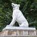 Small photo of Dog of Alcibiades