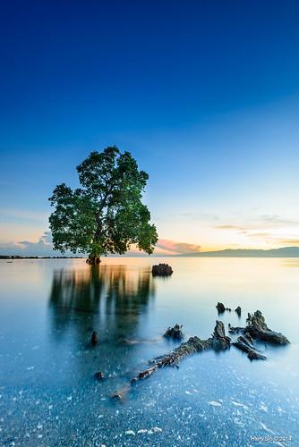 tree sunrise landscape nikon lone d800 elsalvadorcity 1635f4