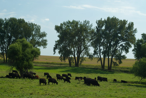 southdakota rural cows country farmland pasture prairie farmfields minnehahacounty slipupcreek
