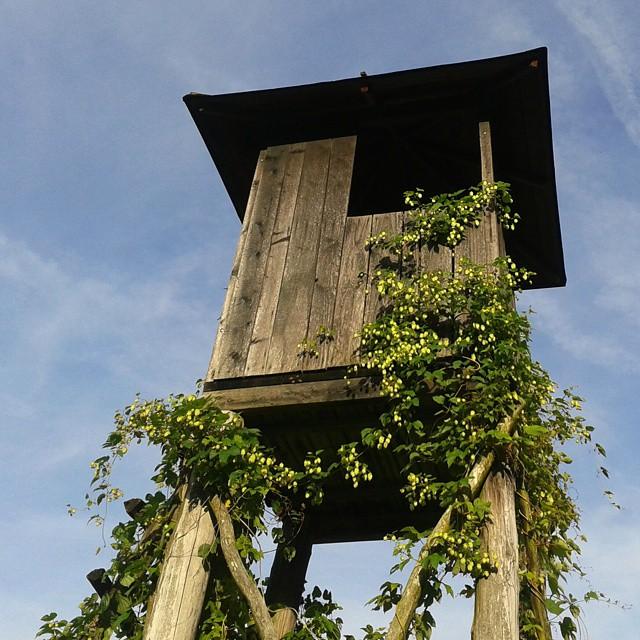 Metsästystorni Slovenian maaseudulla