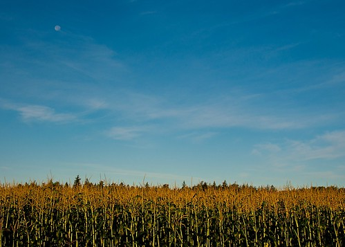 09-09-14 Moon Over Corn Field