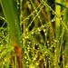 Lágrimas verdes by Zalau33