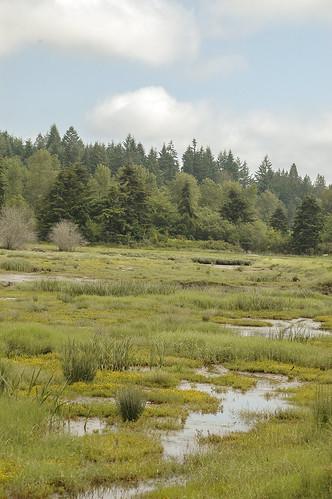 Salt water plants are beginning to reemerge in Klingel Wetlands, thanks to the hard work of NRCS and partners in restoring the original shoreline.