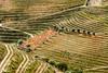 Portugal-Douro vineyards