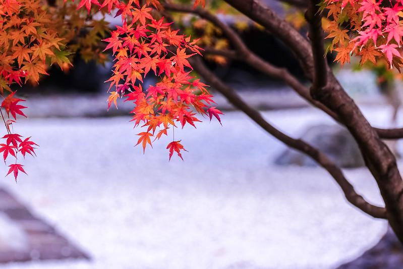 鎌倉長寿寺 紅葉
