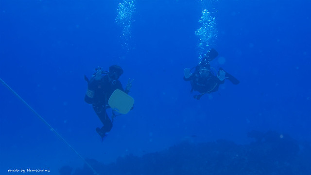 体験チームはすんごいお上手に泳がれてましたね♪