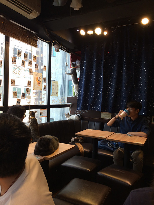 Tang, Christine; Hong Kong - Cat Cafe