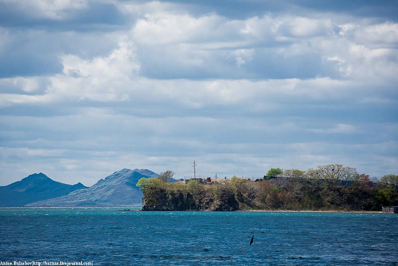 китая животные поселок угольный владивосток фото магазин хорош, олько