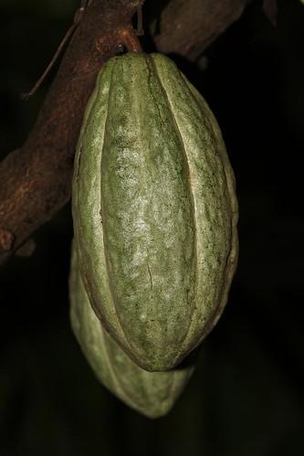 tanzania cocoa matema lakemalawi eastafrica kakao mbeya tukuyu lakenyasa kyela malawisee