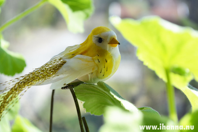 Dear Photo Diary | a Yellow bird in the window